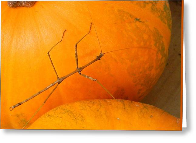 Fall Pumpkin Visitor Greeting Card