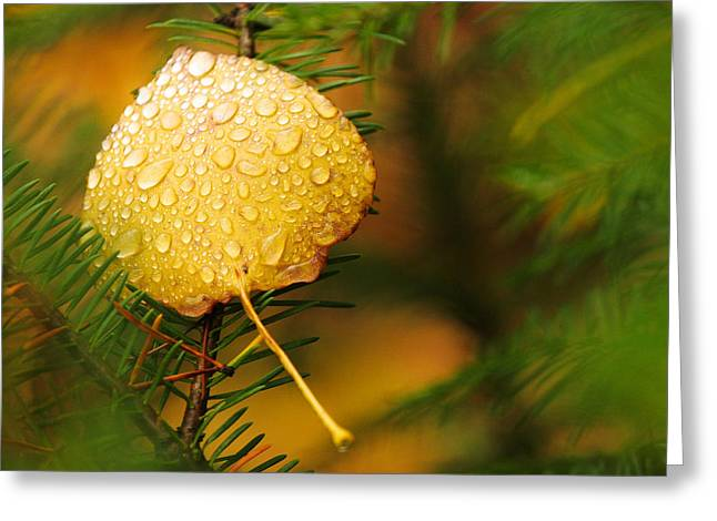 Fall Raindrops Greeting Card by Adam Pender