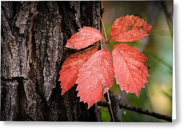 Fall Red Greeting Card by Juli Ellen