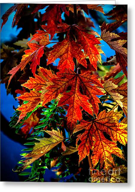Fall Reds Greeting Card by Robert Bales