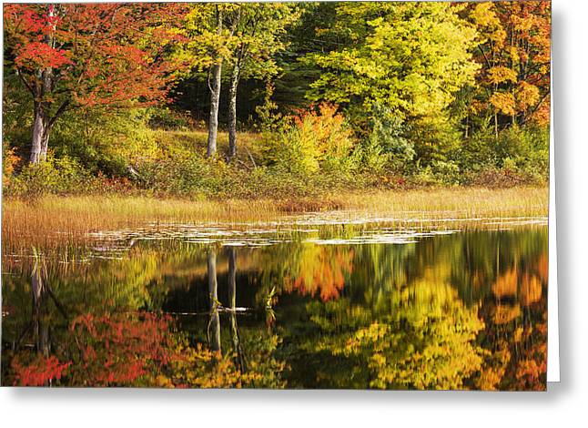 Fall Reflection Greeting Card by Chad Dutson
