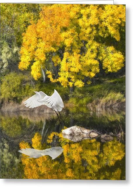 Fall Reflections Greeting Card by Chuck Brittenham