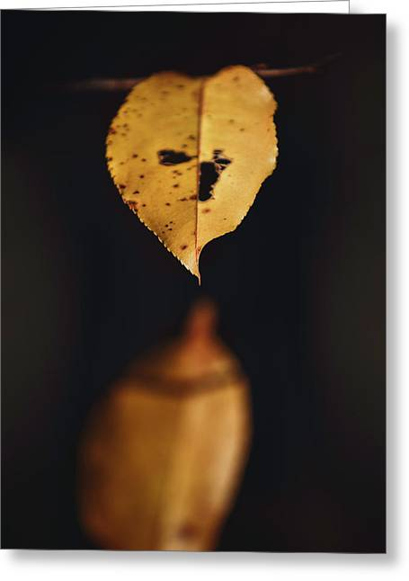 Greeting Card featuring the photograph Fall Reflections by Eduard Moldoveanu