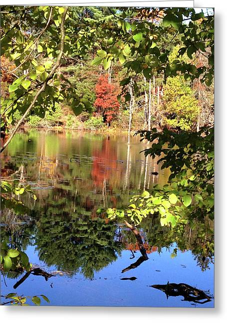 Fall Reflections Greeting Card by Nancy Landry