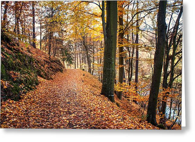 Fall Road Along The Lake Greeting Card by Jenny Rainbow