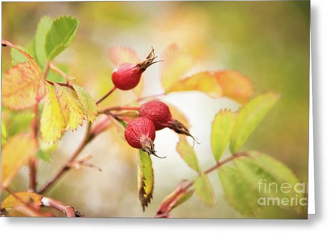 Fall Rose Hips 2 Greeting Card by Wendy Elliott