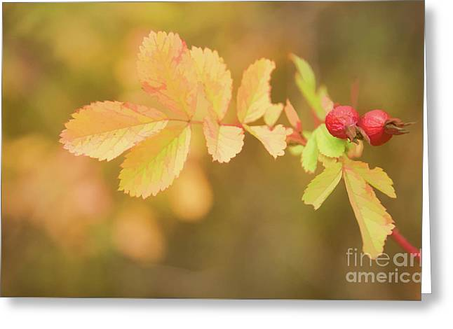 Fall Rose Hips Greeting Card by Wendy Elliott