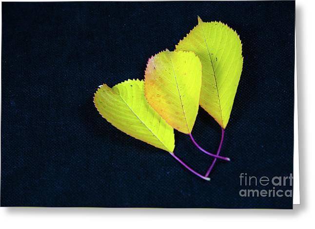Greeting Card featuring the photograph Fall Season Colors by Kennerth and Birgitta Kullman