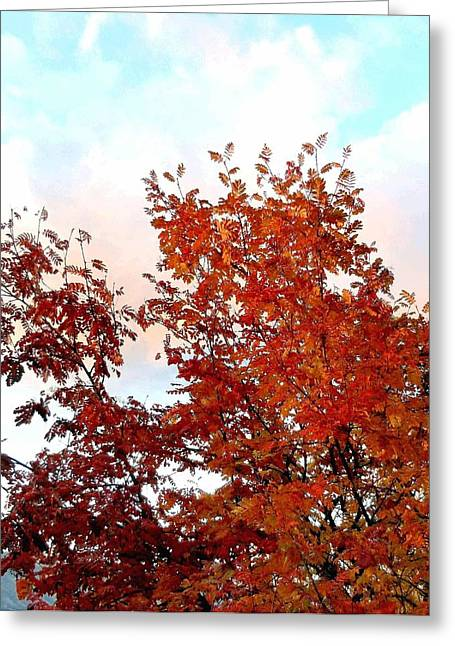 Fall Splendor And A Pastel Sky Greeting Card