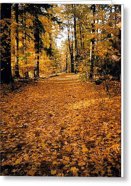 Fall Greeting Card by Stephanie Moore
