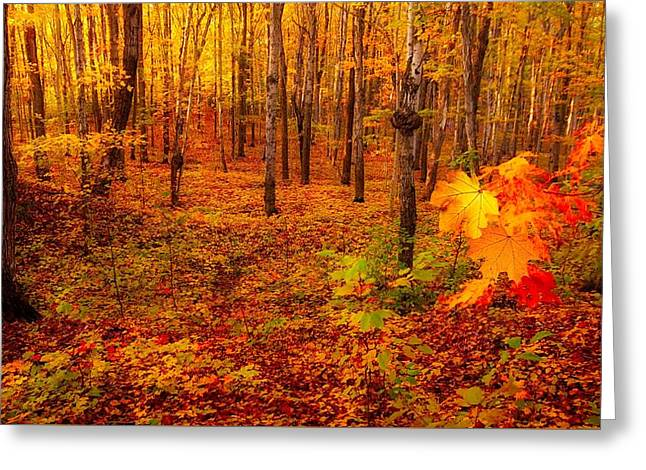 Fall Sugar Bush Greeting Card
