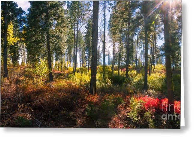 Fall Sun Glow II Greeting Card by Robert Bales