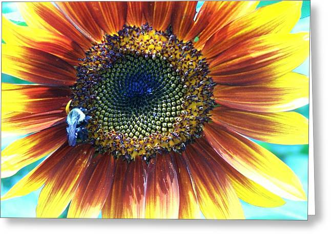 Fall Sunflower Greeting Card by Vijay Sharon Govender