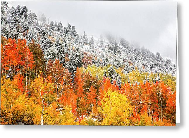 Fall To Winter Canvas Print, Photographic Print, Art Print, Framed Print, Greeting Card, Iphone Case Greeting Card