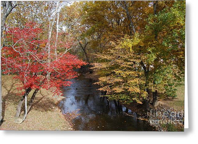 Fall Transition Greeting Card by Eric Liller
