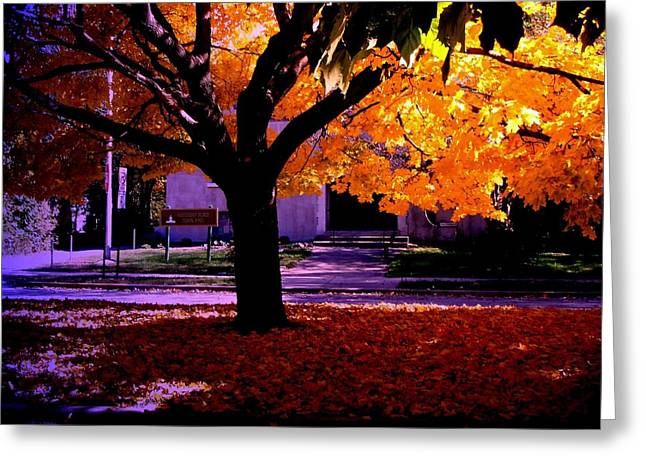 Fall Tree In Woodruff Place Greeting Card by Martin Morehead