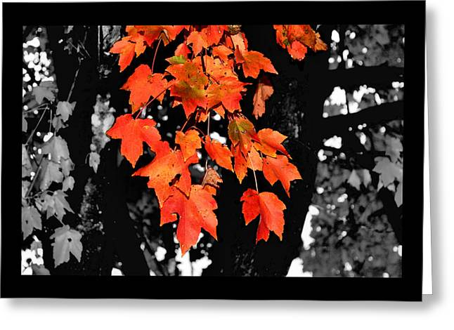Fall Tree Greeting Card by Karen Scovill