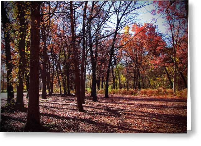 Fall Tree Shadows 2 Greeting Card by Cedric Hampton