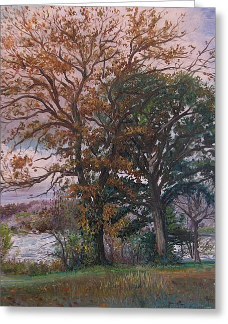 Fall Trees In An Autumn Sunset Greeting Card by Matthew Pinkey