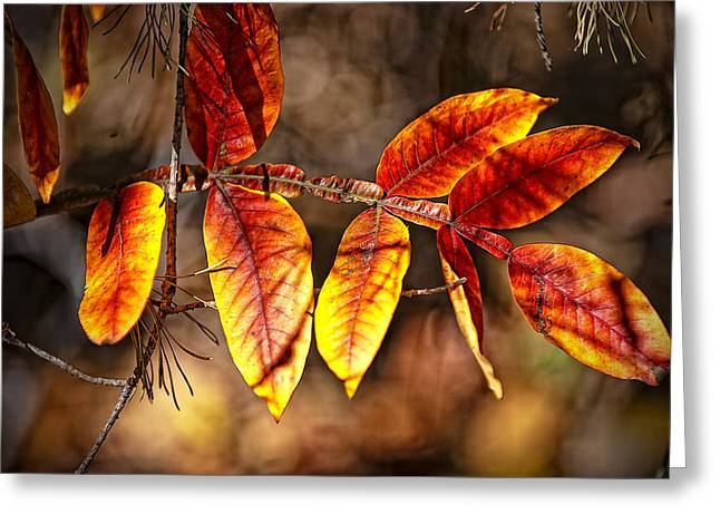Fall Trees Number One Greeting Card by Michael Putnam