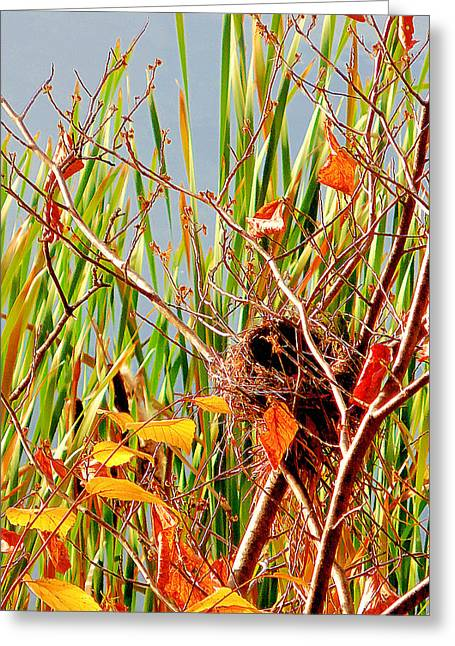 Bird's Nest 1 Greeting Card by Lanjee Chee