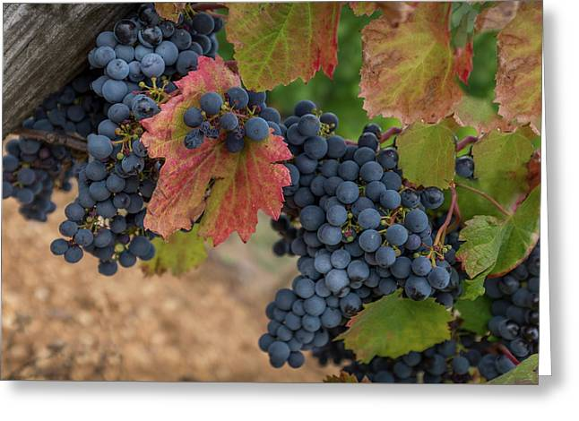 Fall Winery Greeting Card