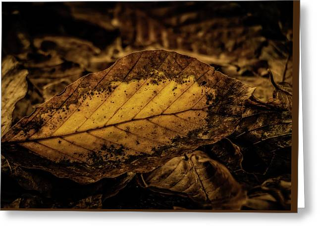Greeting Card featuring the photograph Fallen Color by Odd Jeppesen