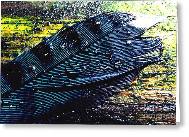 Fallen Feather Greeting Card by Thomas R Fletcher