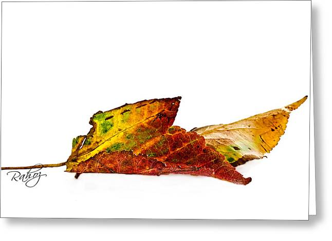 Fallen In Fall  Greeting Card by Rahat Iram
