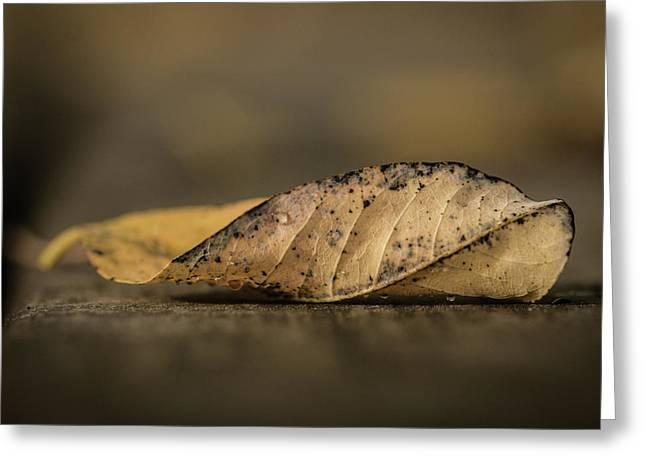Fallen Leaf Greeting Card by Hyuntae Kim