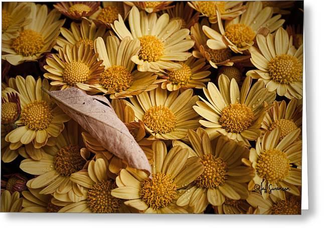 Fallen Leaf Greeting Card by Jeff Swanson