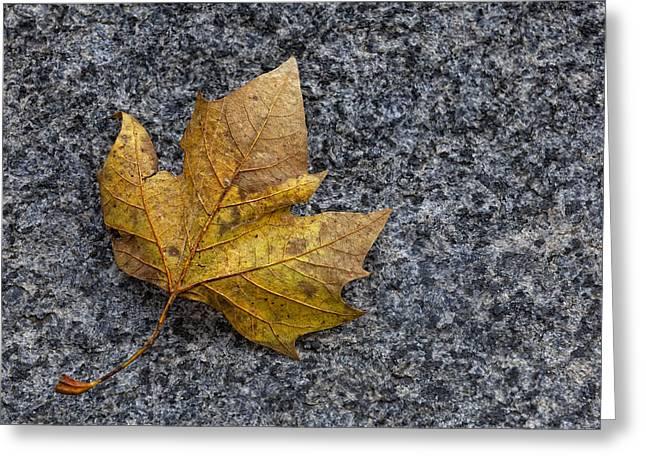 Fallen Leaf Greeting Card by Robert Ullmann