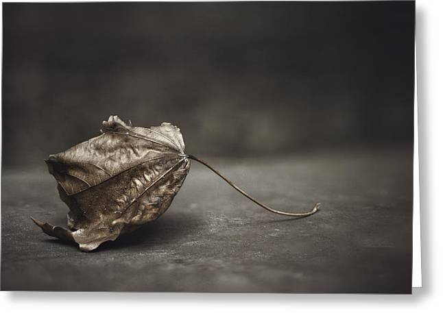 Fallen Leaf Greeting Card by Scott Norris