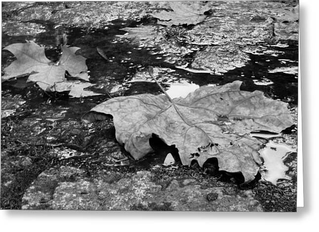 Fallen Leaves Greeting Card by Andre Panatto