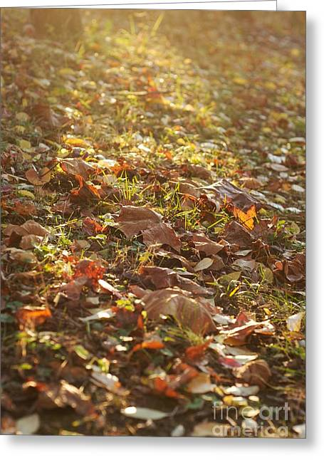 Fallen Leaves At Sunset Greeting Card by Hideaki Sakurai