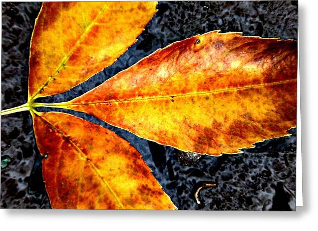 Fallen Leaves Greeting Card by Beth Akerman
