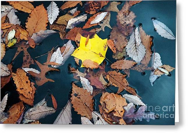 Fallen Leaves Greeting Card by Hideaki Sakurai