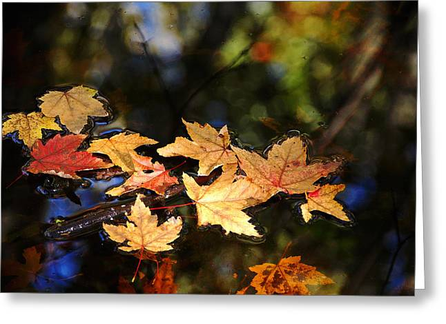 Fallen Leaves On Pond Greeting Card