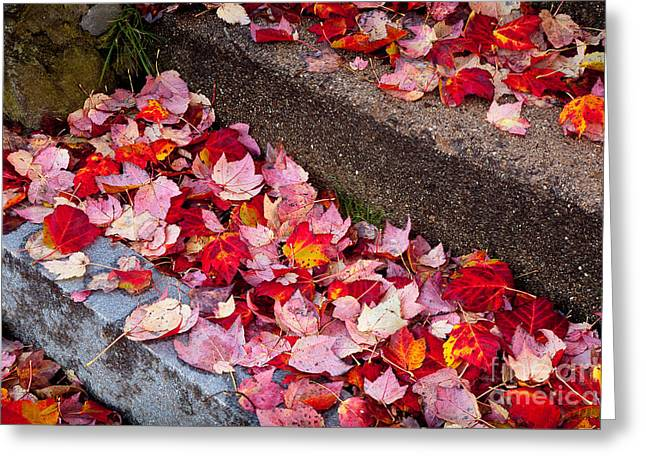 Fallen Leaves On The Steps Greeting Card by Susan Cole Kelly