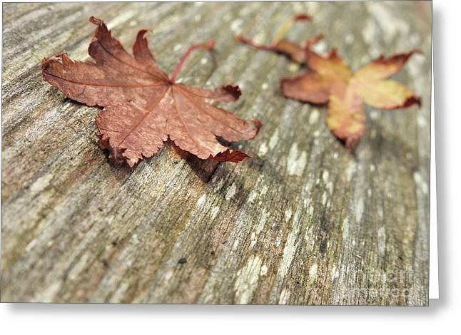 Greeting Card featuring the photograph Fallen Leaves by Peggy Hughes
