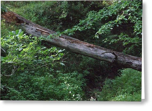 Fallen Log Greeting Card by Michael L Kimble