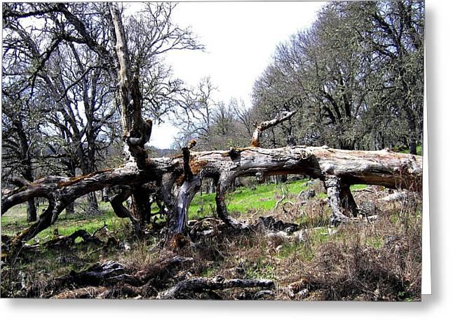 Fallen Mighty Oak Greeting Card