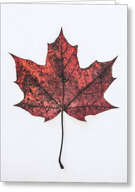 Fallen Red Greeting Card by Kate Morton