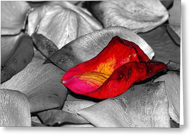 Fallen Rose Petals By Kaye Menner Greeting Card