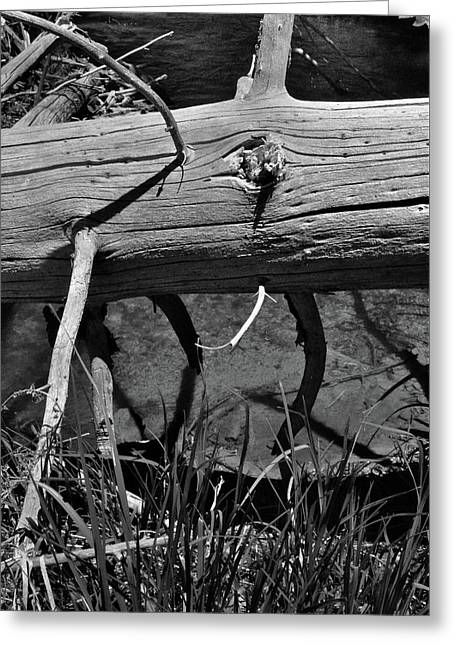 Greeting Card featuring the photograph Fallen Spruce by Ron Cline