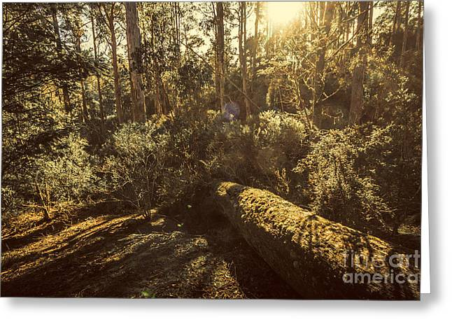 Fallen Tree In Foliage Greeting Card by Jorgo Photography - Wall Art Gallery