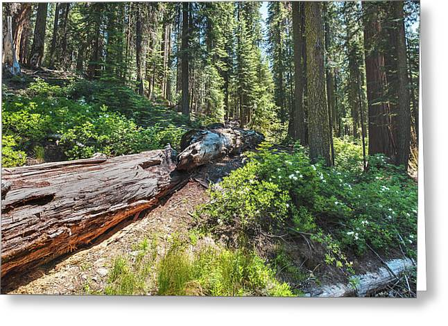 Greeting Card featuring the photograph Fallen Tree- by JD Mims