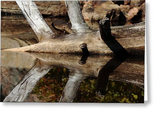 Fallen Tree Mirror Image Greeting Card by Debbie Oppermann