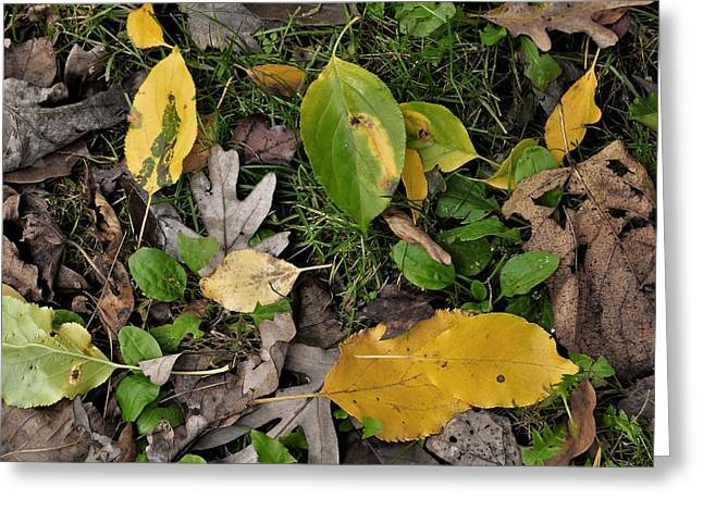 Falling Greeting Card by JAMART Photography
