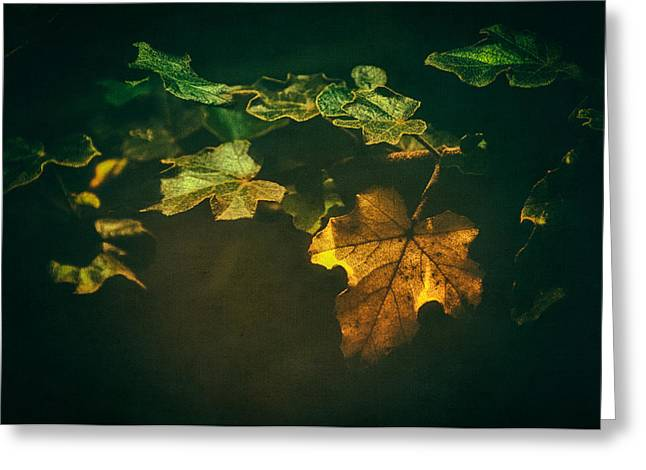 Falling Leaf  Greeting Card